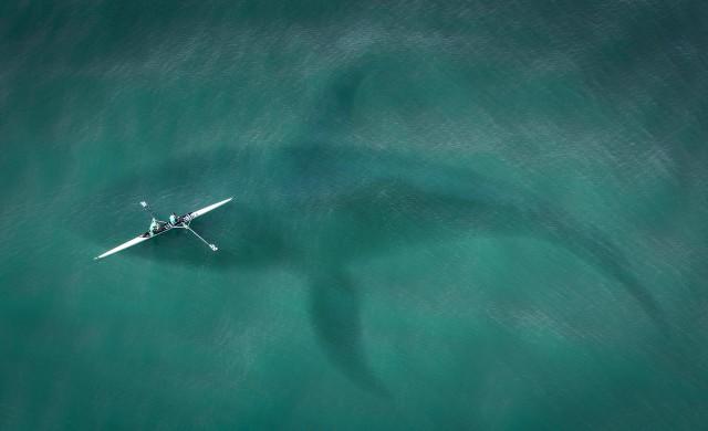Огромна акула забелязаха в Мексиканския залив (видео)