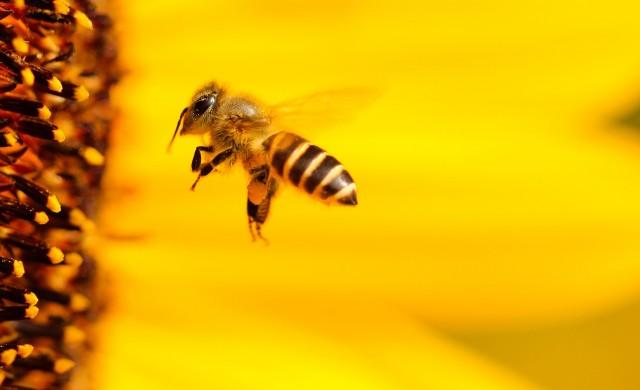 Как карантината помага на пчелите?