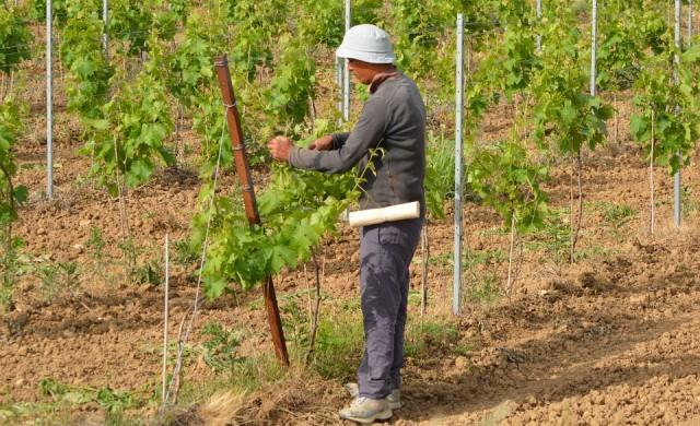 3200 българи заминали на работа в ЕС от началото на 2020 г.