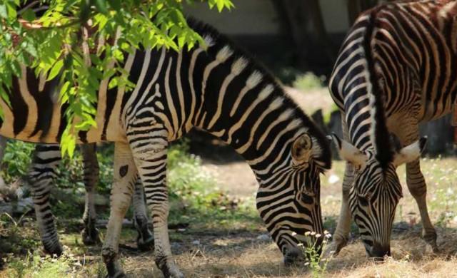 Зоопаркът в София отбелязва 133-тата си годишнина