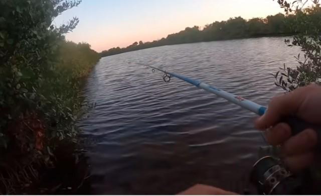 Рибар от Флорида за малко да стане улова на деня (видео)