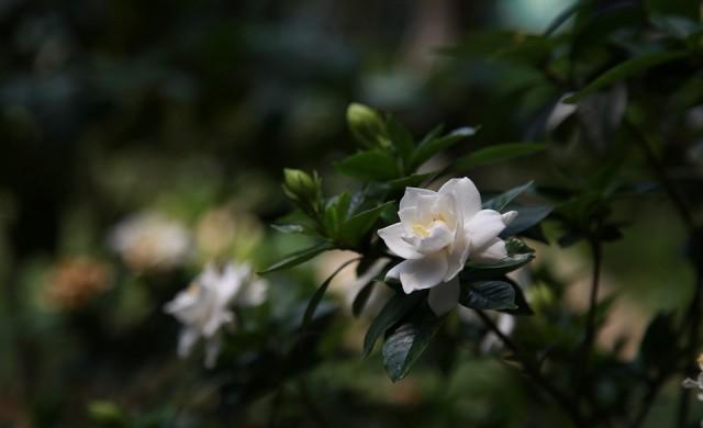 Шест стайни растения, които ще се справят с неприятната миризма у дома