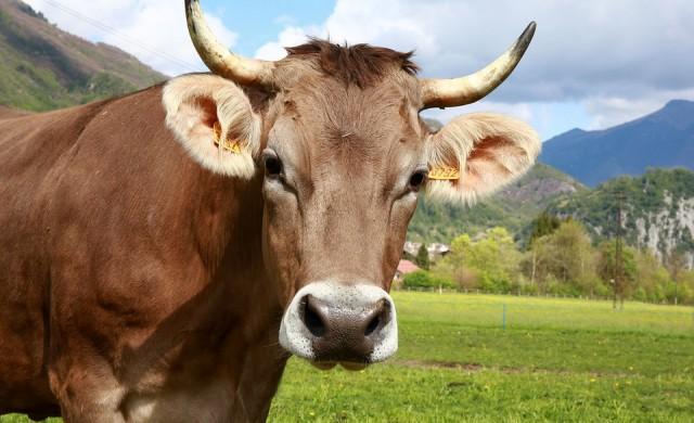 България загубила 72% от животновъдството и птицефермите си от 2005 г насам