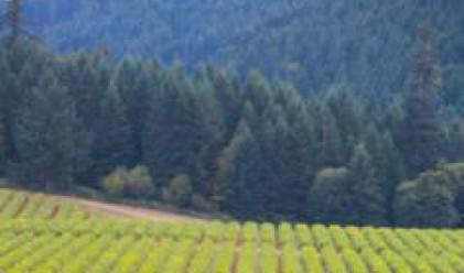 Към края на май Елана Фонд за Земеделска Земя АДСИЦ има 183 хил. дка земеделска земя