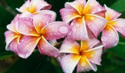 Търговци на цветя от седем страни се събират на форум във Видин