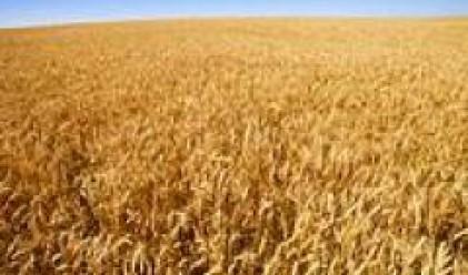 ЕК удължи безмитния внос на зърно в съюза до 30 юни 2009 г.