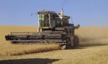 Цената на пшеницата падна до 300 лв./т