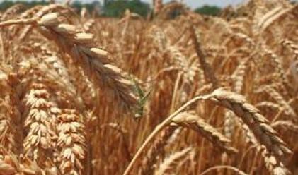 ДФ Земеделие изкупи пшеница и ечемик за 2.6 млн. eвро