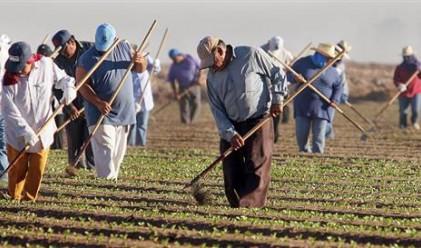 Българи и румънци заемат местата на полските работници