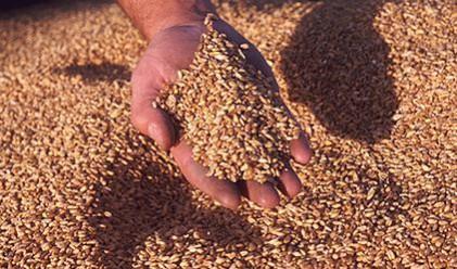 Търговците на зърно се свързват с НАП до ноември