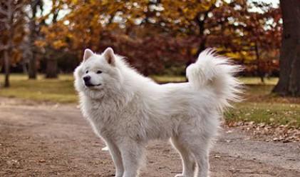 Любимите породи кучета на богаташите