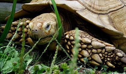 Развод след 115 години съвместен живот в зоопарка