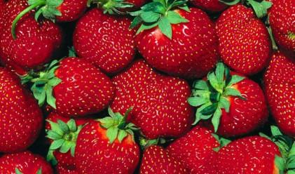 Откраднаха...1 тон ягоди от ферма