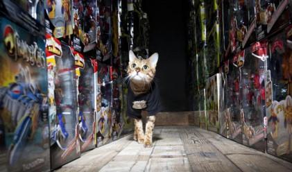 Котка стана пазач на склад за играчки