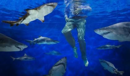 Хотел в Дубай предлага къпане с акули