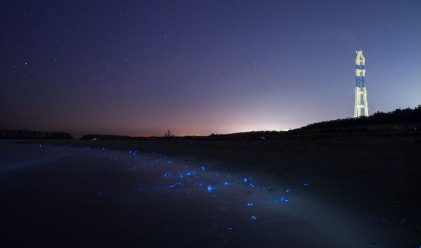 Светещи калмари направиха невероятно шоу в Япония