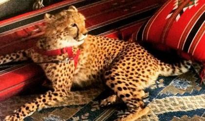 Екзотичните животни на богатите хлапета от Instagram