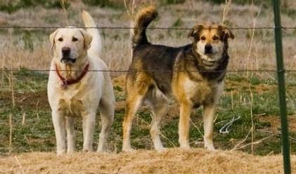 В Иран погват кучетата – проводник на западната култура