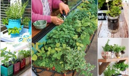 10 билкови градини за дома, които заемат ужасно малко място