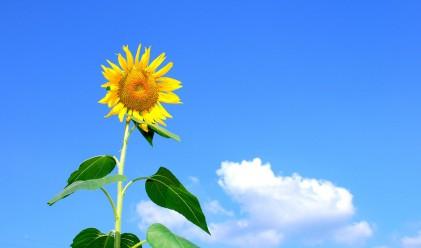 Най-ниските температури през юли - между 12 и 17 градуса