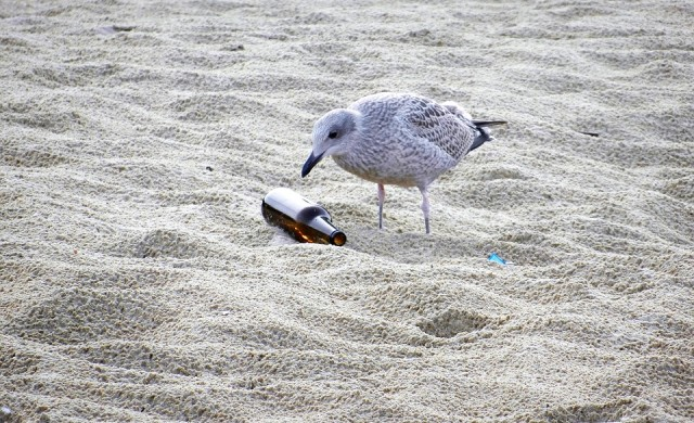 ООН: Замърсяването на океаните е по-сериозно от всякога