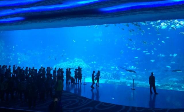 10-те най-големи аквариума в света