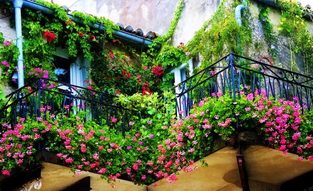 20 идеи как да озеленим балкона