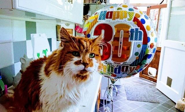 Най-старата котка в света навърши 30 години