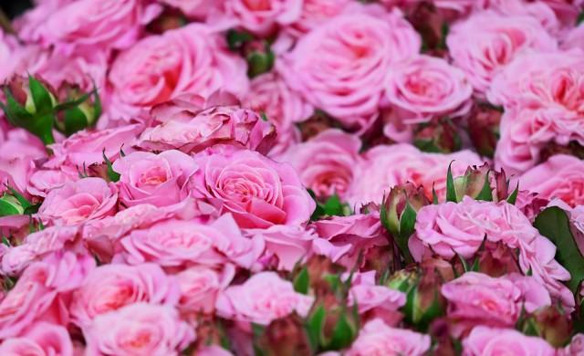 Китайска компания купува розово масло за 40 млн. лева