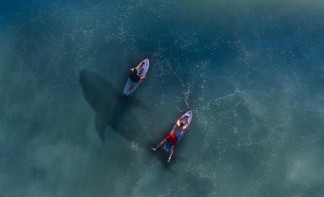 Жена плува редом до акула, без да подозира за опасността (видео)
