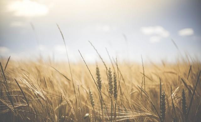 Пет начина, по които светът ще може да се изхранва през 2050 г.