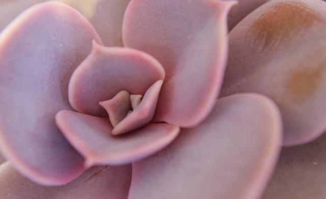 Удивителното растение, завладяло любители на цветята и градинари