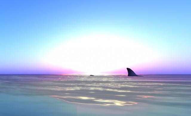 Бялата акула, която има собствен акаунт в Twitter