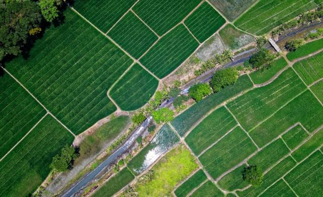 Колко струва земеделската земя в България?
