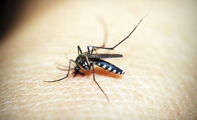 Ще почивате в Гърция? Внимавайте с ухапванията от комари!
