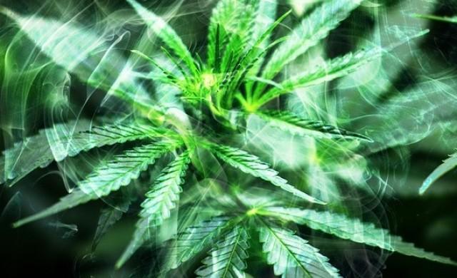 Как гледат големите корпорации на легалната марихуана?