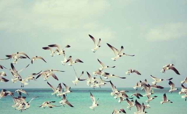 Най-красивите плажове на планетата