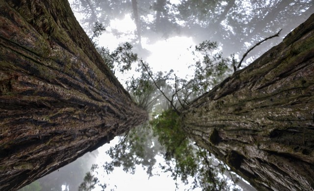 Разходка из гората, дом на най-високите дървета на Земята