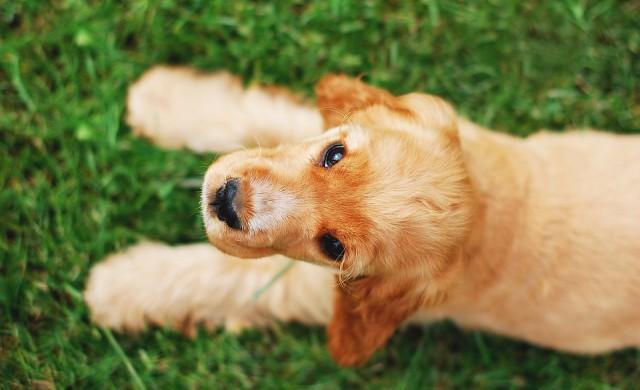 Най-подходящите за деца породи кучета