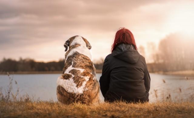 Кучетата имат вродена способност да разбират хората