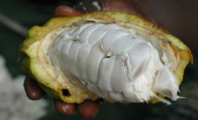 Иновативното ново приложение на какаото