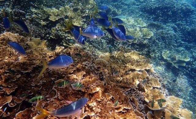 ЮНЕСКО и Австралия в спор за Големия бариерен риф