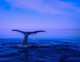 Разказ от първо лице: Да се озовеш в устата на кит