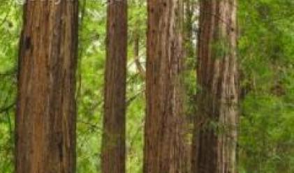 Природозащитници организират пресконференция за Природен парк Странджа