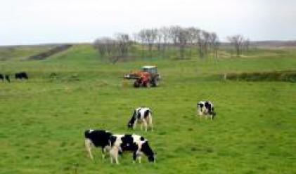 300 българи оставени без работа в британска ферма