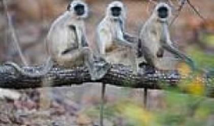 Маймуните имат нюх към бизнеса, смятат италиански учени
