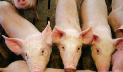 Меком: Имаме 40 000 свине