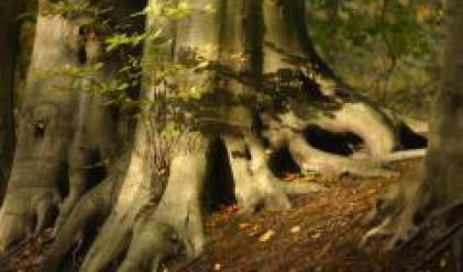Внесоха жалба в ЕК заради замените на държавни гори у нас