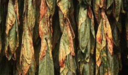 """Над 109 млн. лв. са получили от Фонд """"Тютюн"""" тютюнопроизводителите през 2007 г."""