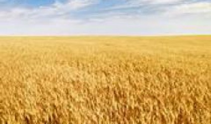 2008 Wheat Harvest Expected to Be Extremely Good